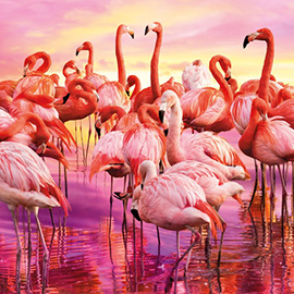 Puzzle 1000 Flamingo Dance